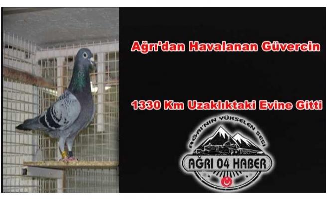Türkiye'nin En İyi Güvercini Ağrı'dan Uçtu