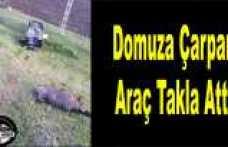 Ağrı da Domuza Çarpan Araç Takla Attı