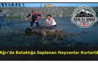 Ağrı'da Mahalleli Hayvanların İmdadına Yetişti