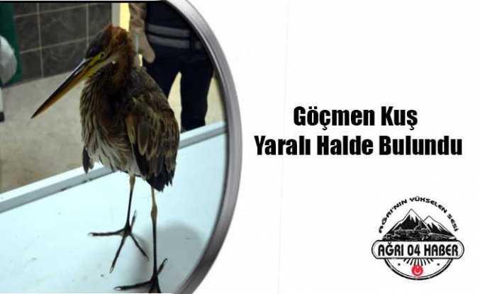 Göçmen Kuş Ağrı da Tedavi Altına Alındı