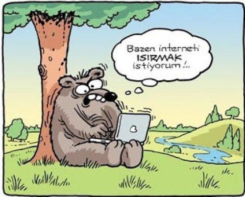 Ayı-İnternet
